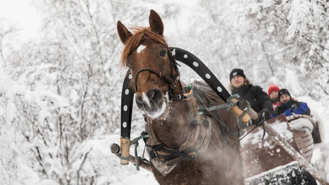 Fun Horse ride in winter at Aurora Village Ivalo Lapland Finland.